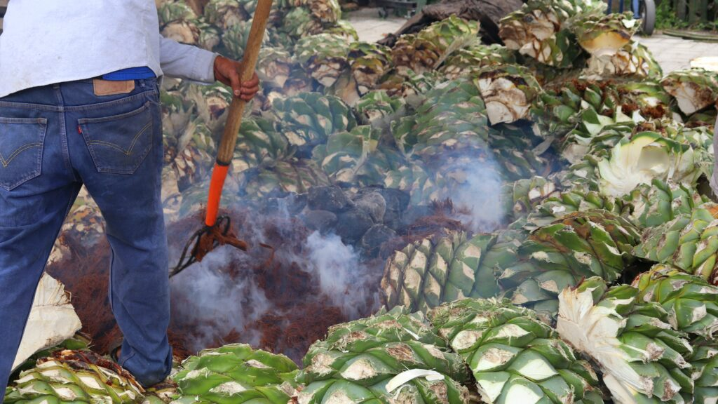 agave being pit roasted for mezcal production